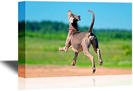 Funny Flying Animals A Dog is Ready to Fly Nursery Wall Kids