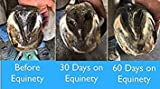 Equinety Horse Products