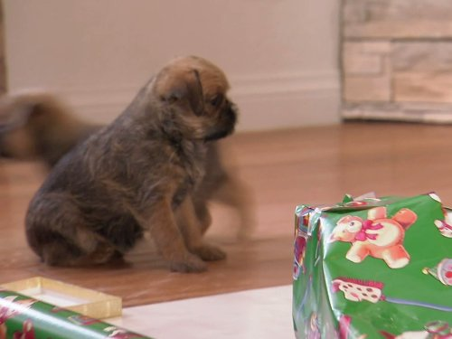 Puppy and Kitten Holiday Special (And Christmas Puppies Kittens)