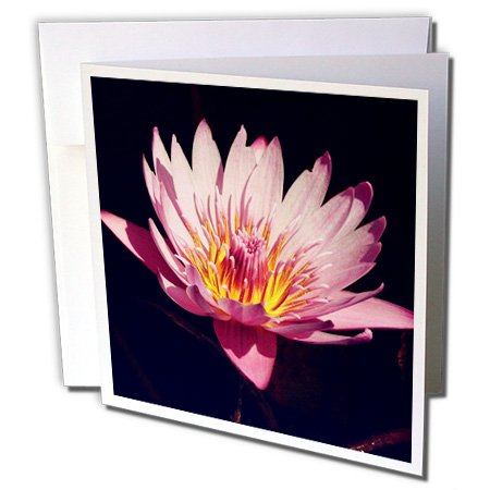 3dRose Greeting Cards, 6 x 6 Inches, Pack of 6, Lotus Flower (gc_183773_1)