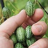 Home Garden Perennial Bonsai Thumb Camelon Mini Watermelon Seeds Miniature Succulent Fruit Plants Seeds - 1 Bag 10 Pieces