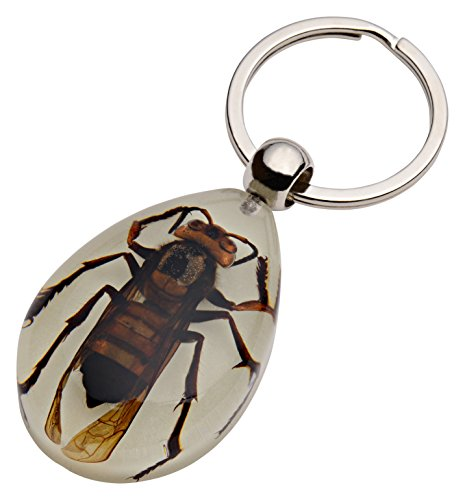 Amazing Nature's Glow-in-the-Dark Real Insect Keychain (Wasp) -