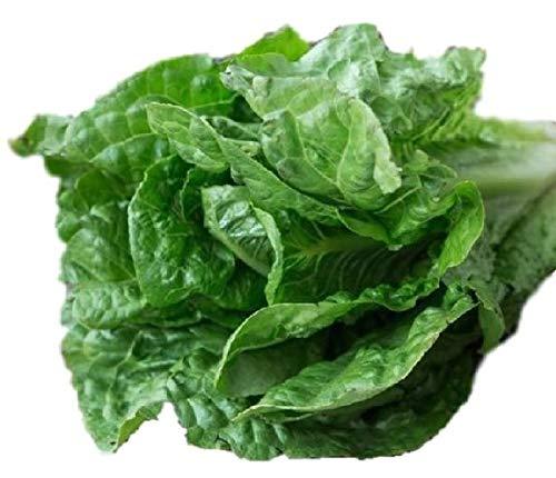Parris Island Lettuce Seeds - Heirloom Organic - 4,000 Seeds Non GMO