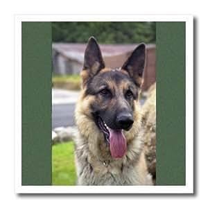 3drose German Shepherd Portrait Iron on Heat Transfer Paper, 8 by 8-Inch