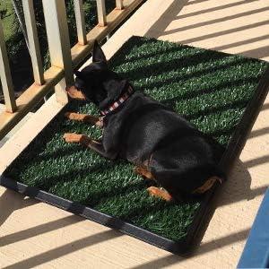 Sailnovo Hundeklo Hunde Toilette Echtem Rasen Welpentoilette Trainingsunterlage f/ür Kleine Hunde Grosse Hunde /ältere Hunde Tier WC Indoor 63 x 50x 7 L x B x H cm