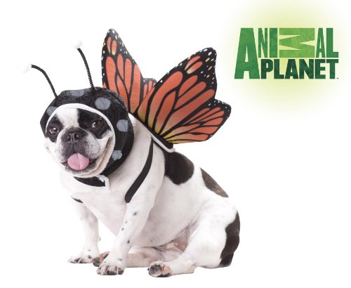 [Animal Planet PET20101 Butterfly Dog Costume, X-Small] (Affordable Costumes)