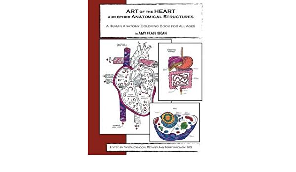 A Human Anatomy Coloring Book Art Of The Heart And Other Anatomical Structures Paperback Common Amy G Sloan And Sigita Cahoon Md 0884826352778 Amazon Com Books