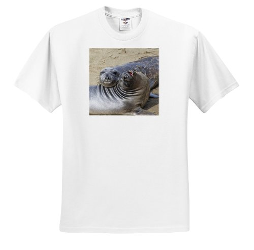 Danita Delimont - Seals - Piedras Blancas Elephant Seal Rookery, California - US05 CHA0044 - Chuck Haney - T-Shirts - Adult T-Shirt Medium (ts_88295_2)