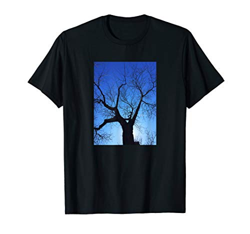 Photo Tree Silhouette Morning - Afternoon Blue Sky Sun ()