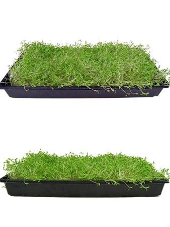 Dark Green Italian Flat-Leaf Parsley Seeds: 5 Lb - Bulk, Non-GMO Herb Seeds for Herbal Garden & Microgreens by Mountain Valley Seed Company (Image #4)