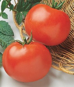 Burpee Tomato Rutgers 50618 (Red Slicer) 25 Heirloom Seeds