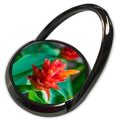3dRose Danita Delimont - Flowers - Bromeliad, Flower, Honolulu, Oahu, Hawaii. - Phone Ring (phr_314798_1)