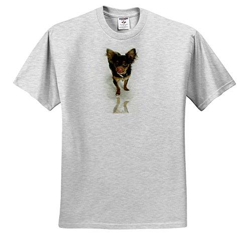 Dogs Chihuahua - Long Hair Chihuahua - T-Shirts - Adult Birch-Gray-T-Shirt XL (Birch Gray T-shirt)