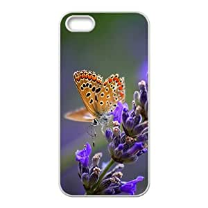 The Beautiful Butterfly Hight Quality Plastic Case for Iphone 5s
