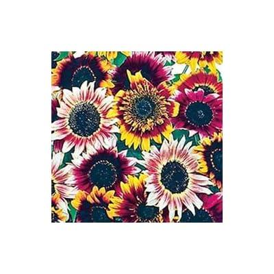 """(ASUN)~""""BOHEMIAN RHAPSODY MIX"""" SUNFLOWER~Seeds!~~~~A Sunflower Rainbow! : Garden & Outdoor"""
