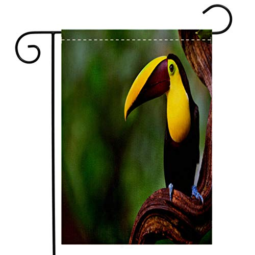 BEIVIVI Creative Home Garden Flag Chestnut mandibled Toucan in Costa rica Welcome House Flag for Patio Lawn Outdoor Home Decor ()