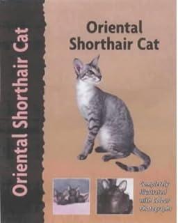 oriental shorthair cat pet love - Coloration Hnn