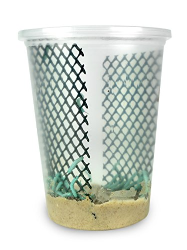 vmfeeders 25-30 Live Hornworms with Enough Food to Grow Them from 1-1/2 to 2