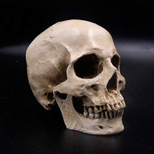 AGONG Human Skull Lifesize 1:1 Resin Replica Medical Model Aquarium Ornament Fish Tank Waterscape Cave Halloween Home Decoration