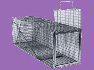 "Humane Animal Box Trap, 30"" x 11"" x 12"""