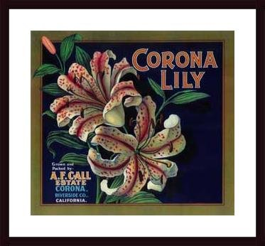 Corona Lily Orange Label, 1920, framed black wood, white matte