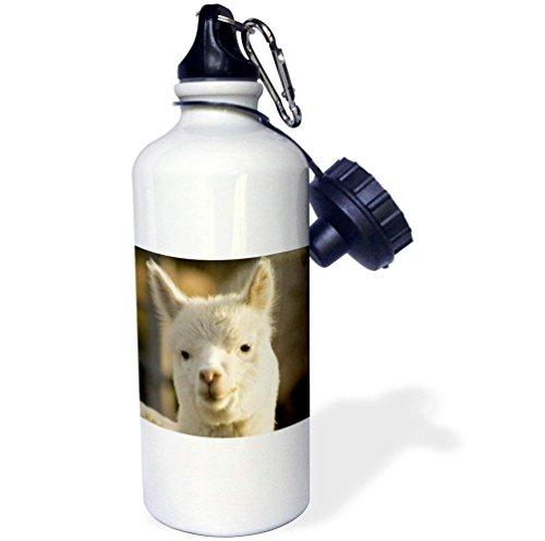 18a438c55805 Llama, Suasi Island, Lake Titicaca, Peru-SA17 JME0472-John and Lisa Merrill  Sports Water Bottle, 21 oz, White