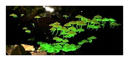 Glow in the Dark Mushroom Growing Habitat Kit Project Plaything