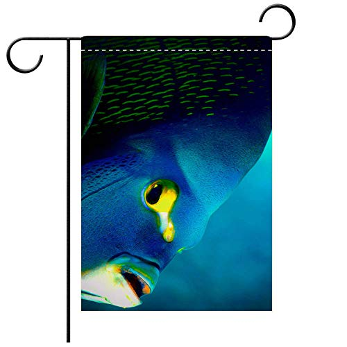 BEICICI Artistically Designed Yard Flags, Double Sided French Angelfish (Pomacanthus paru) Decorative Deck, Patio, Porch, Balcony Backyard, Garden or Lawn - French Angel Fish
