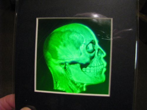Brain/Skull Matted Hologram Picture, Collectible Polaroid Photopolymer - Ma Cambridge Framing