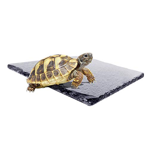 Natural Reptile Habitat Rocks, Turtle Basking Platform Accessory Décor for Amphibian Habitat