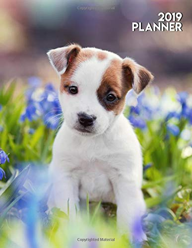2019 Planner: Pretty White Jack Russell Terrier Puppy for sale  Delivered anywhere in Canada