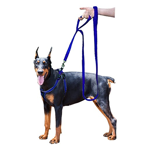 Blue Dog Flexible Leash - 2