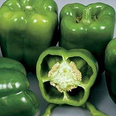 Colossal Hybrid F1 Sweet Bell Pepper Seeds - Pepper stays firm and crunchy. (25 - Seeds) : Garden & Outdoor
