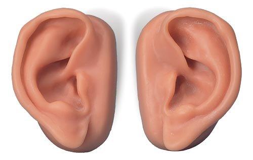 3B社 鍼灸シミュレータ 耳鍼モデル10人用セット (n16)   B003Z2OF7Y