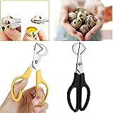 Wffo Pigeon Quail Egg Scissors, Cracker Opener Cigar Cutter Stainless Steel Tool (Yellow)