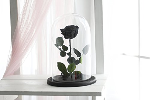 Beauty and the beast rose, Size Large, Live Forever Rose, Enchanted Rose, Rose in glass dome, Forever rose, Rose in Glass, preserved rose, preserved flower, Black rose by JulianasDesign