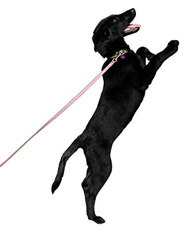 COA Puppy Training Line ()