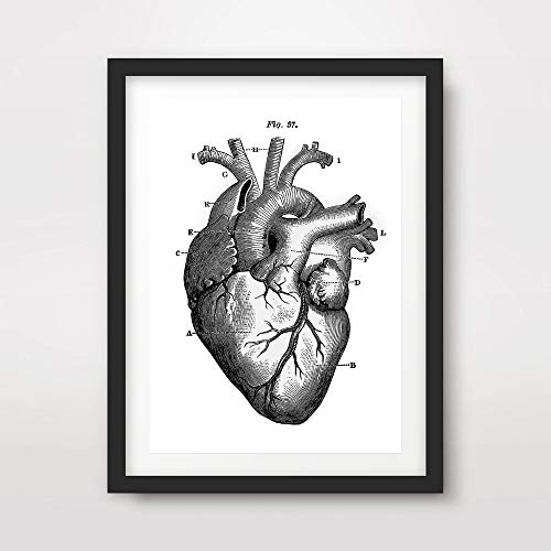 Art Heart Human (HEART MEDICAL ART PRINT ANATOMICAL ANATOMY MEDICINE HUMAN BODY BIOLOGICAL CHART DIAGRAM ILLUSTRATION VINTAGE ANTIQUE Poster Home Decor Wall Picture A4 A3 A2 (10 Size Options))