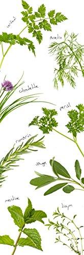 PLAGE 162271–Adesivo per cucine e frigorifero erbe aromatiche–Vinile 180x 0.1x 59,5cm, Multicolore PLAGE SA