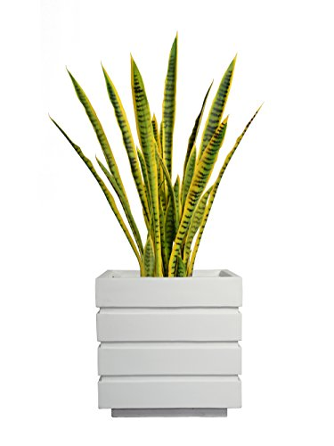 """Price comparison product image Laura Ashley VHX121211 41"""" Tall Snake Plant in Planter Tree"""