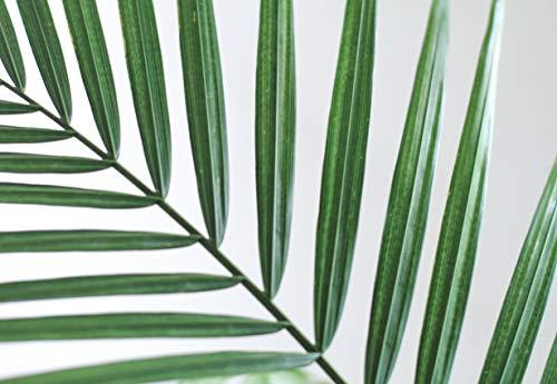 Green Plant Stem (Art Print)