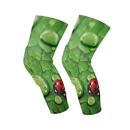 Knee Sleeve Raindrops On Green Leaf and Ladybug Full Leg Brace Compression Long Sleeves Pant Socks for Running, Jogging, Sports, Crossfit, Basketball, Joint Pain Relief, Men and Women 1 Pair