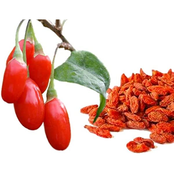 Amazon Com Special Sale Goji Berries Plant Seeds Nutritious