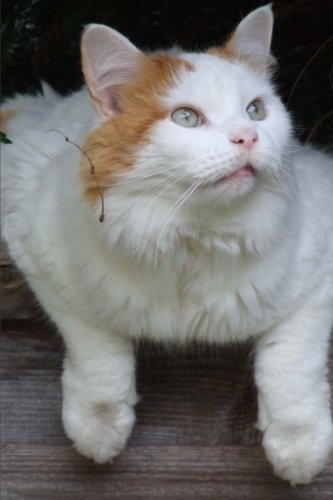 (Pretty Turkish Van Cat Journal: 150 Page Lined Notebook/Diary)