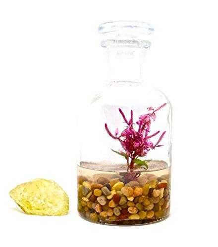 Live Flower Terrarium, Zero Care, Great for Work, Home, Unique Gift! Long Lasting