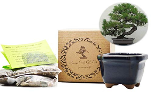 9GreenBox - Japanese Black Pine Bonsai Seed Kit- Gift - Complete Kit to Grow Dwan Red Wood Bonsai from Seed