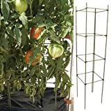 TOMATO/VEGETABLE FIBER GLASS CAGES