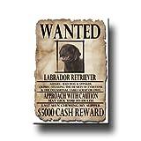 Labrador Retriever Wanted Fridge Magnet (Chocolate)