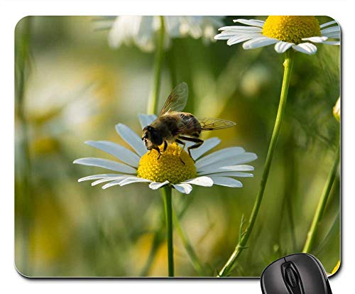 (Mouse Pad - Standing Fly Schwirrfliege Chamomile Color Flower)