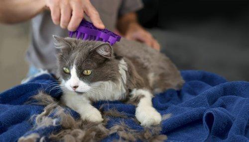 KONG-ZoomGroom-Cat-Grooming-Brush